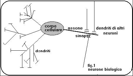 rete_neurale_biologica.jpg
