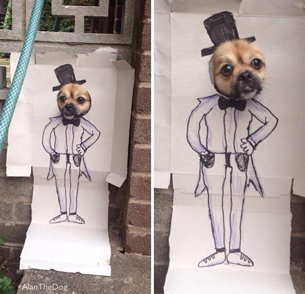 divertente cane