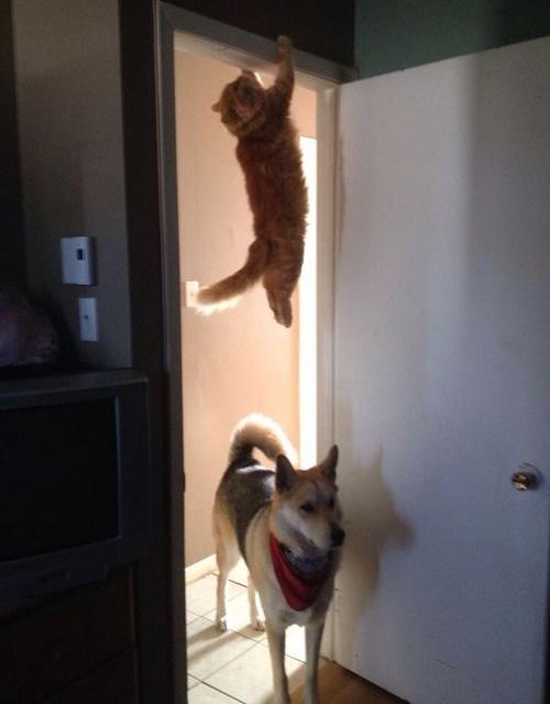 immagine cane e gatto