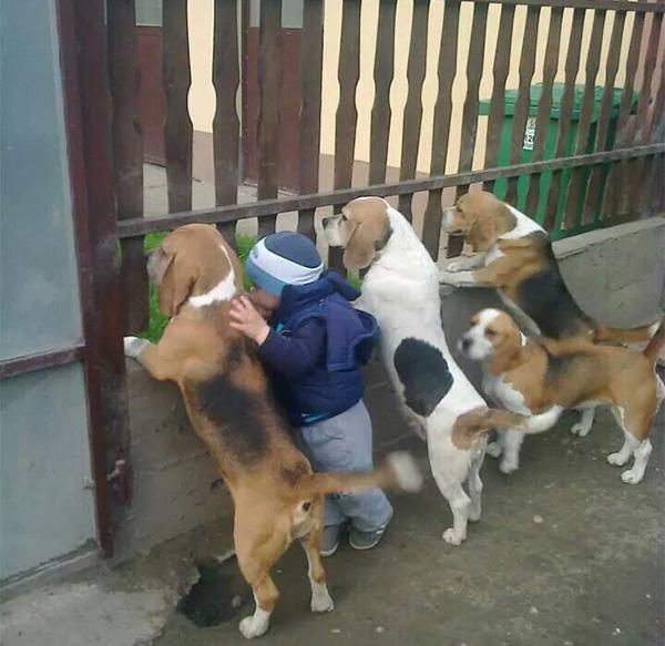 immagine bellissima cani